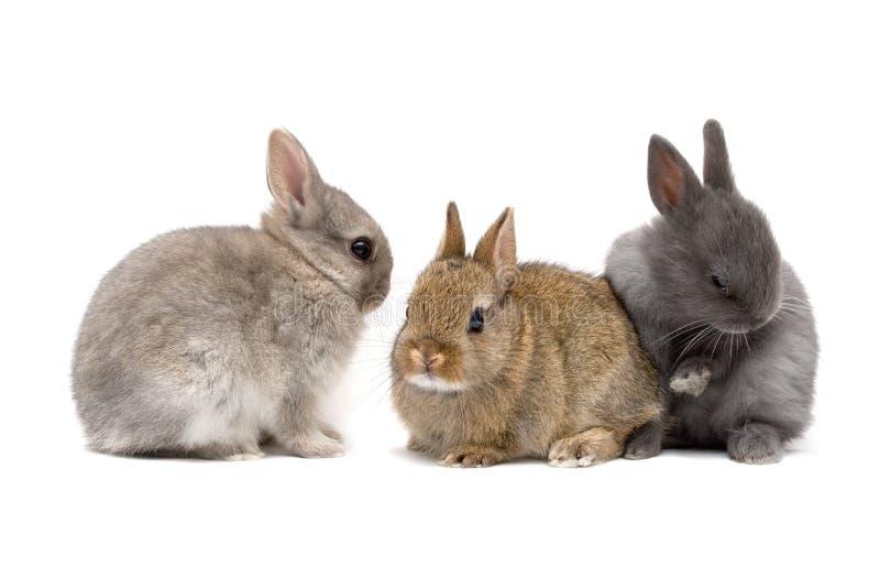 Coniglietti fotografia stock libera da diritti