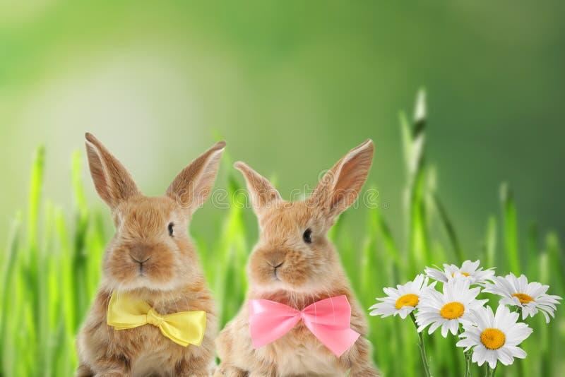 Coniglietti di pasqua simili a pelliccia adorabili con le cravatte a farfalla sveglie immagini stock
