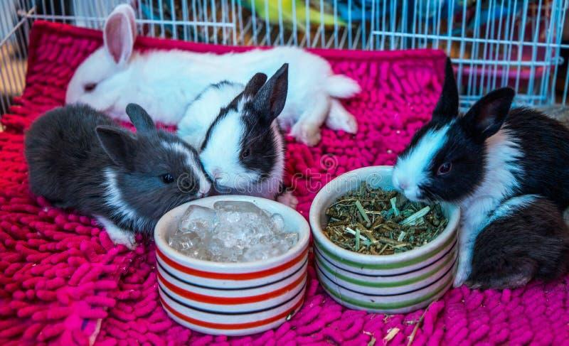 Coniglietti nani sulla vendita al mercato fotografie stock libere da diritti