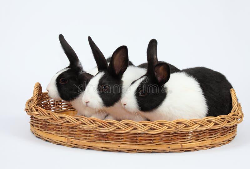 Coniglietti svegli immagine stock