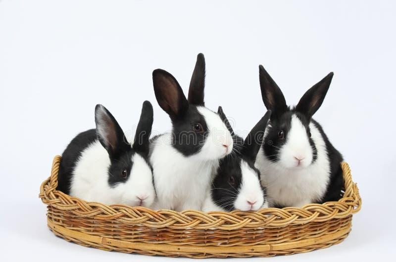 Coniglietti svegli fotografia stock libera da diritti