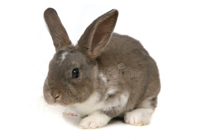 Coniglietto adorabile su priorità bassa bianca fotografie stock