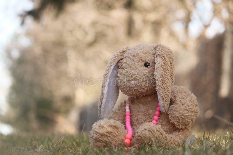 Coniglietto con gli accessori fotografia stock libera da diritti