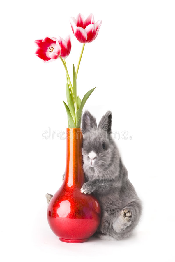 Coniglietto del bambino con i tulipani immagini stock libere da diritti