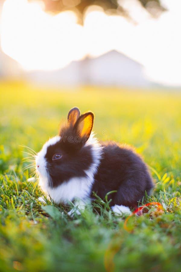 Coniglietto del bambino in erba fotografia stock