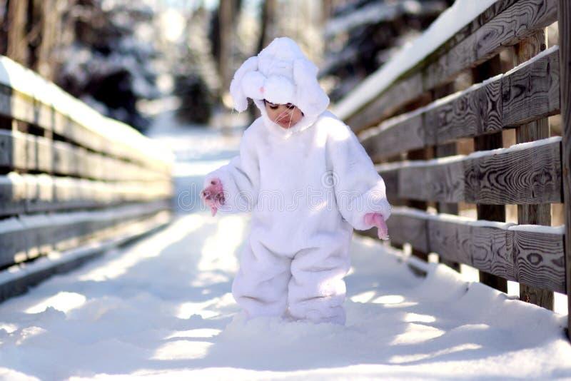 Coniglietto di inverno fotografia stock