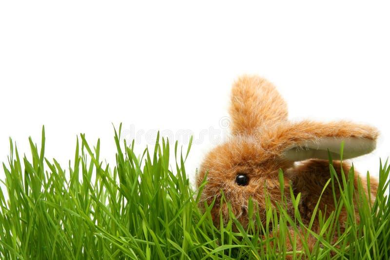 Coniglietto di pasqua immagine stock