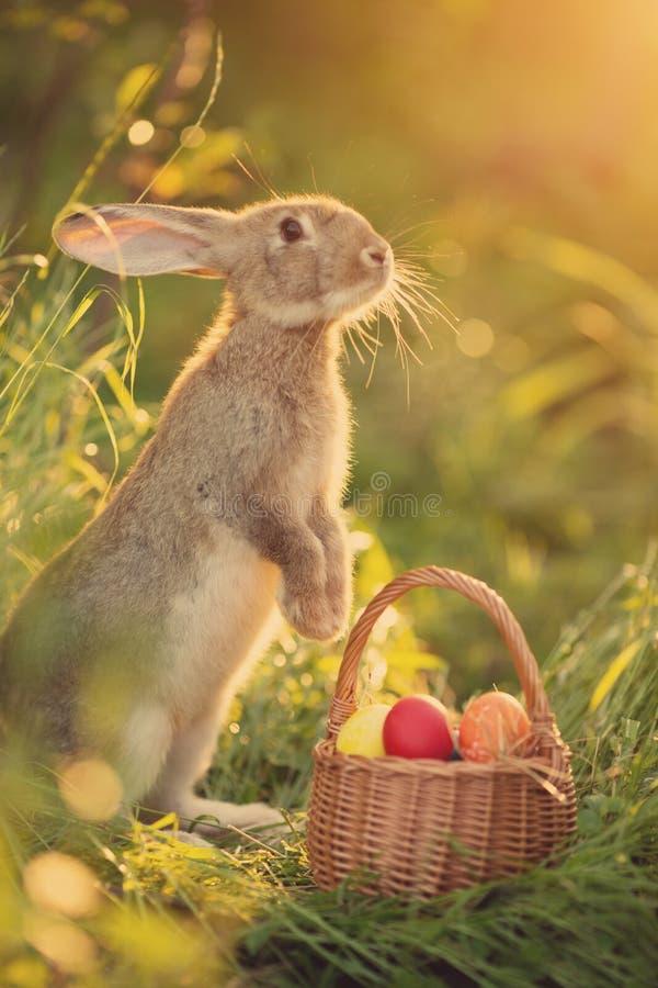 Coniglietto di pasqua con un canestro delle uova Coniglietto di pasqua felice su una carta immagine stock