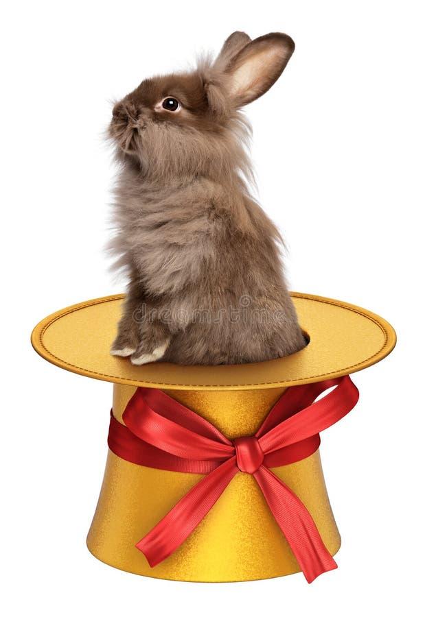 Coniglietto di pasqua divertente che scala da un cilindro dorato royalty illustrazione gratis