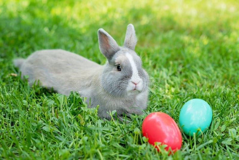 Coniglietto di pasqua ed uova di Pasqua sull'erba verde della molla Coniglio sveglio immagini stock