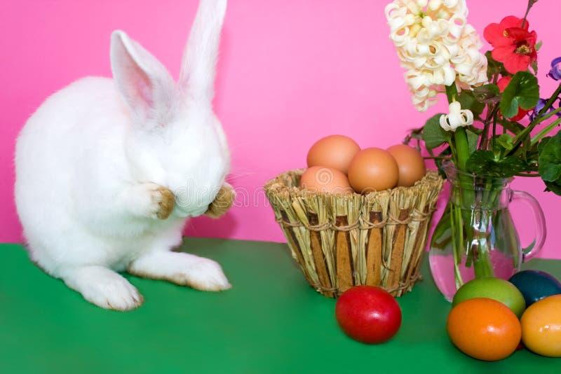 Coniglietto di pasqua - giocando pellame - e - ricerca fotografia stock libera da diritti
