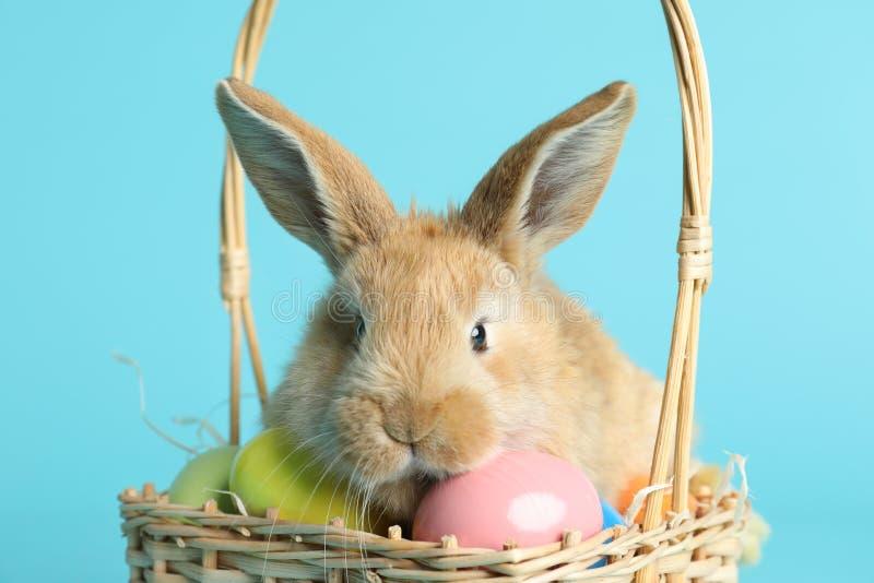 Coniglietto di pasqua simile a pelliccia adorabile in canestro di vimini con le uova tinte sul fondo di colore immagine stock libera da diritti