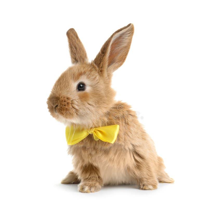 Coniglietto di pasqua simile a pelliccia adorabile con la cravatta a farfalla sveglia immagini stock libere da diritti