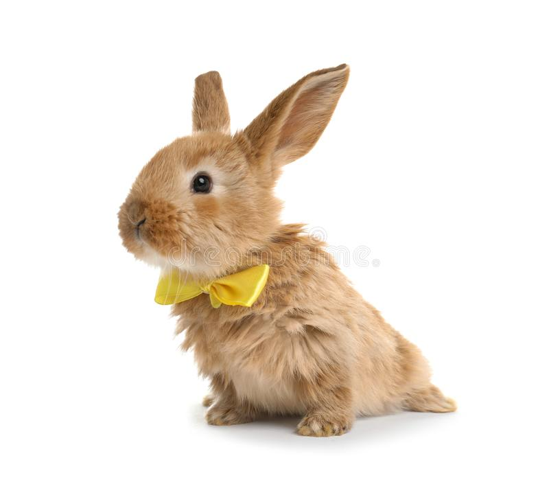 Coniglietto di pasqua simile a pelliccia adorabile con la cravatta a farfalla sveglia immagine stock libera da diritti
