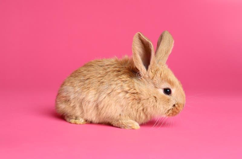 Coniglietto di pasqua simile a pelliccia adorabile immagine stock