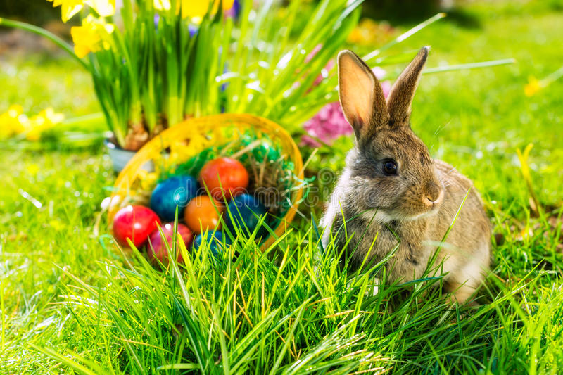 Coniglietto di pasqua sul prato con il canestro e le uova immagine stock