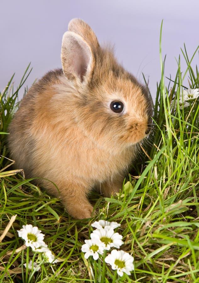 Coniglietto di pasqua timido fotografia stock