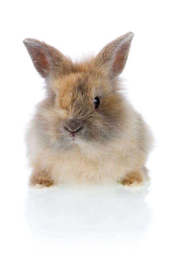 Coniglietto divertente fotografia stock