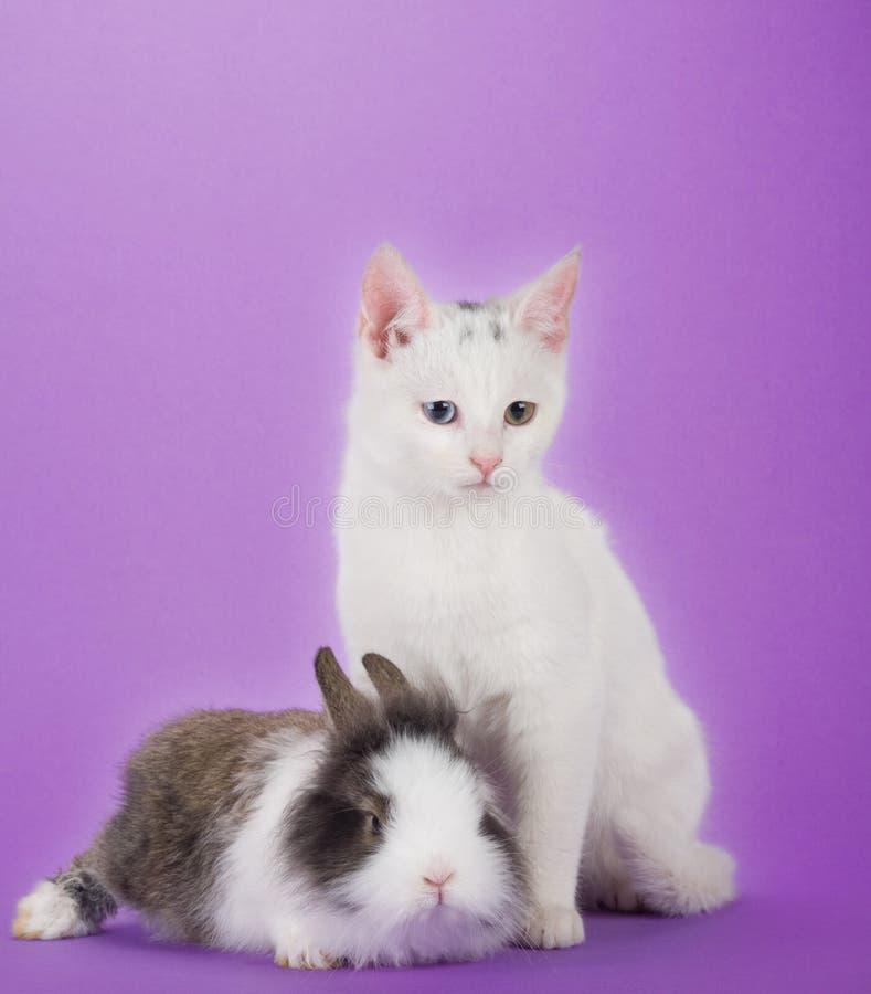 Coniglietto e gattino, isolati fotografia stock