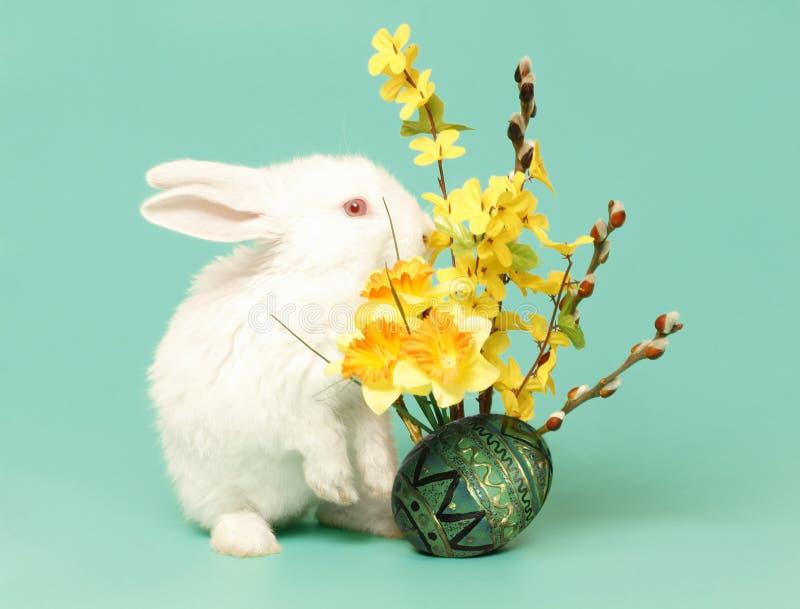 Coniglietto ed uovo di pasqua fotografia stock libera da diritti