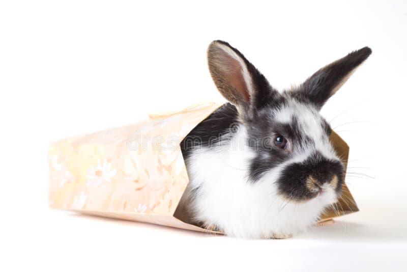 Coniglietto macchiato nella borsa, isolata