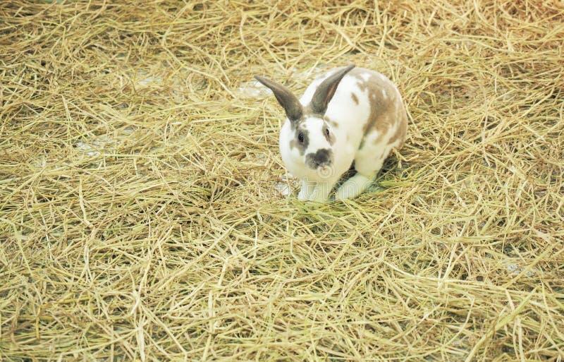 Coniglietto nell'azienda agricola fotografia stock libera da diritti