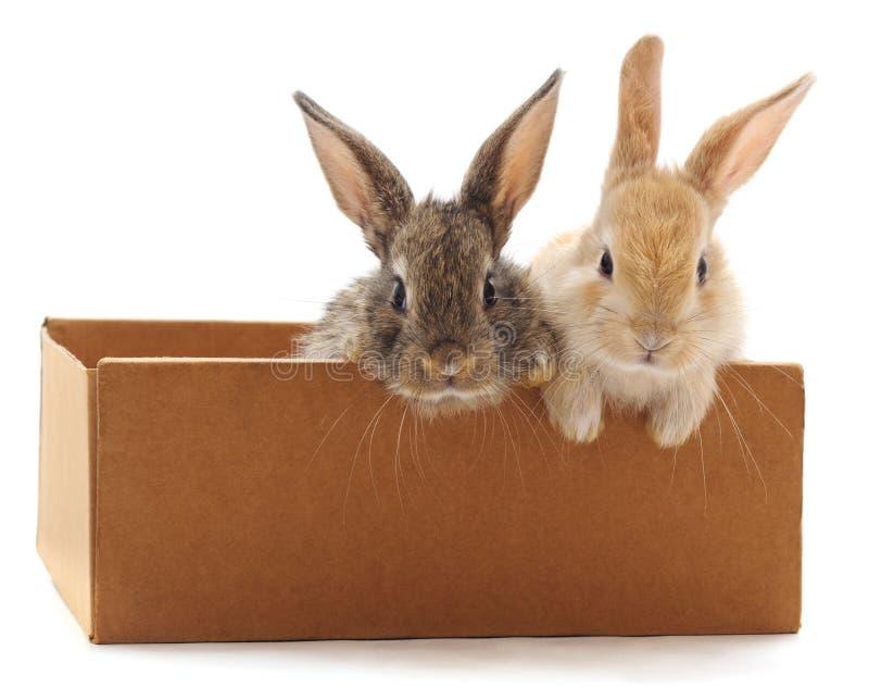 Coniglietto rosso in scatola immagini stock libere da diritti