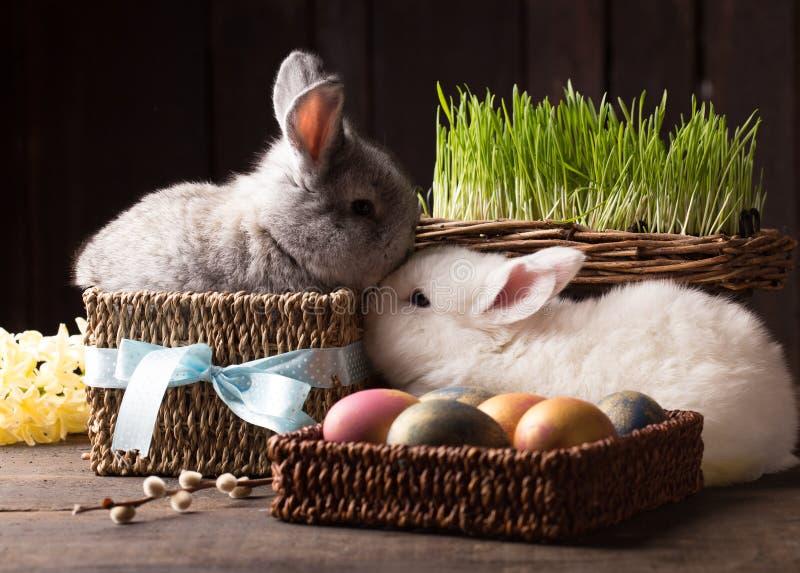 Coniglietto sveglio di due pasqua con le uova colorate fotografie stock libere da diritti