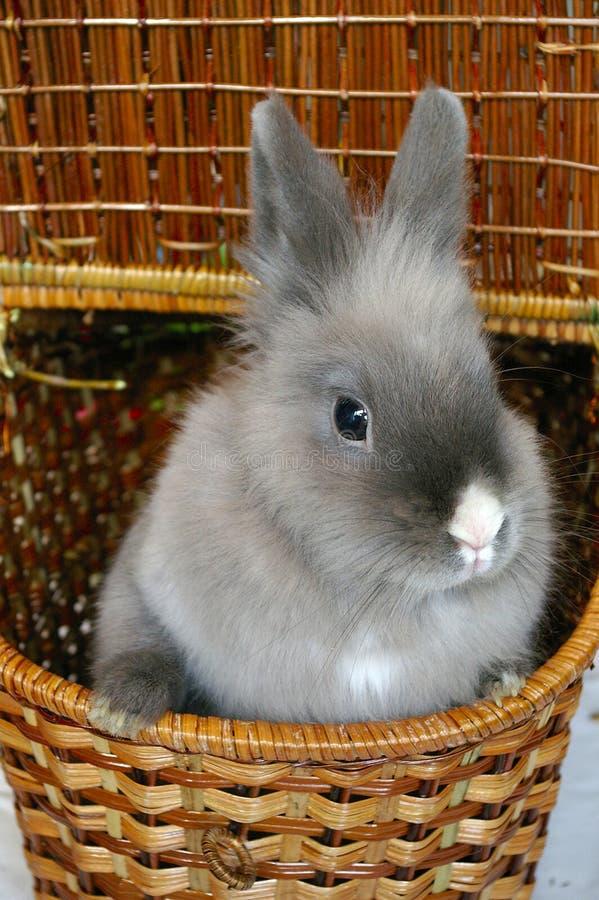 Coniglietto in un cestino fotografie stock libere da diritti
