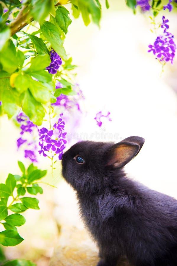 Coniglio immagine stock