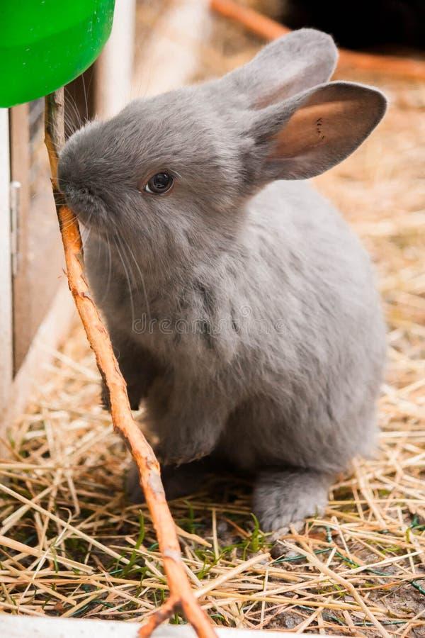 Coniglio immagini stock libere da diritti