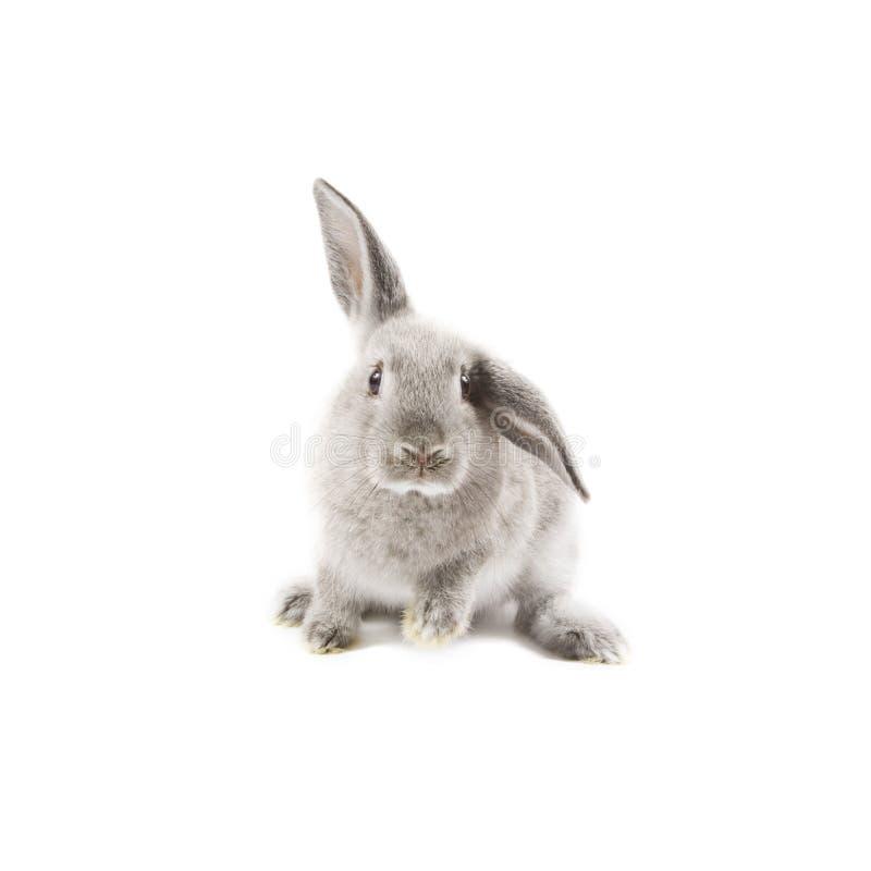 Coniglio fotografie stock