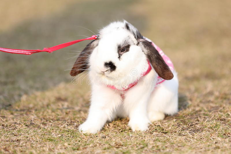 Coniglio fotografia stock