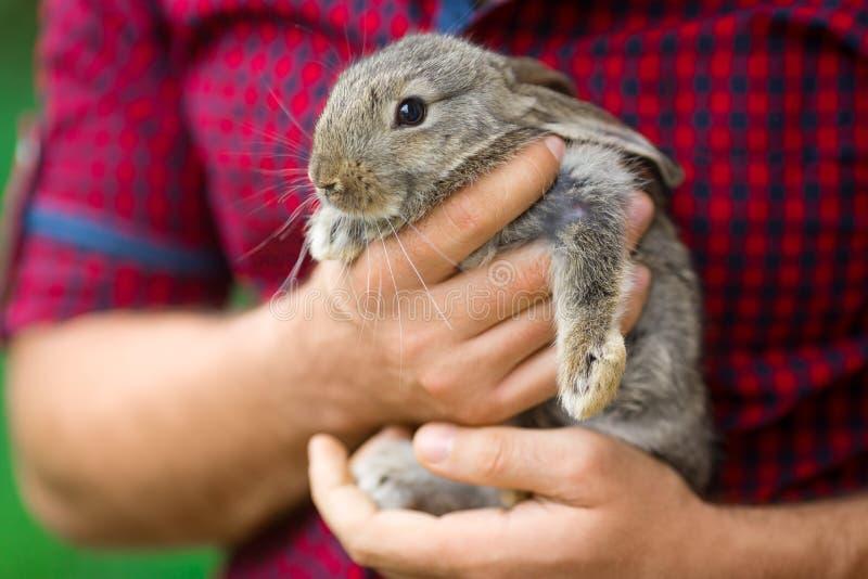 Coniglio Animali e la gente fotografie stock libere da diritti