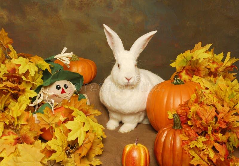 Coniglio bianco con le zucche e lo spaventapasseri farcito immagine stock libera da diritti