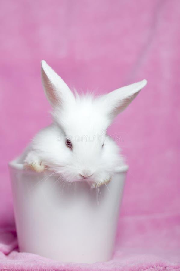 Coniglio bianco sveglio del bambino fotografie stock libere da diritti