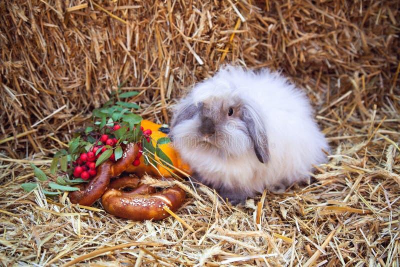 Coniglio che si siede sulla pila di paglia immagini stock libere da diritti