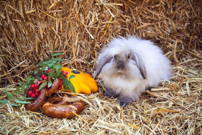 Coniglio con le ciambelline salate e la zucca che si siedono in paglia fotografia stock