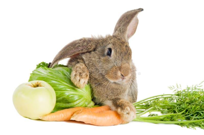 Coniglio del Brown con le verdure fotografia stock libera da diritti