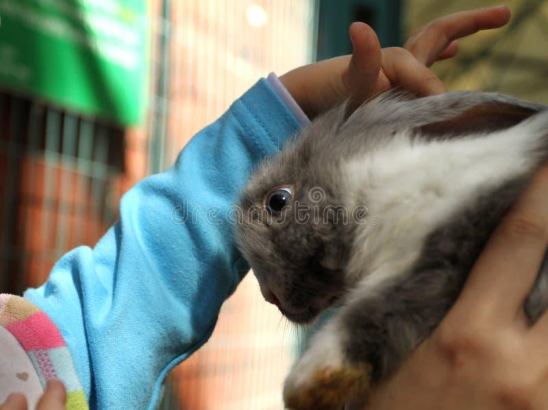 Coniglio della testarossa nello zoo immagine stock libera da diritti