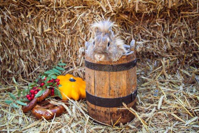 Coniglio di Brown in secchio fotografia stock