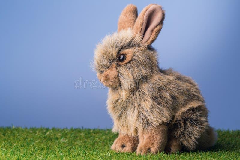 Coniglio di coniglietto grigio immagine stock