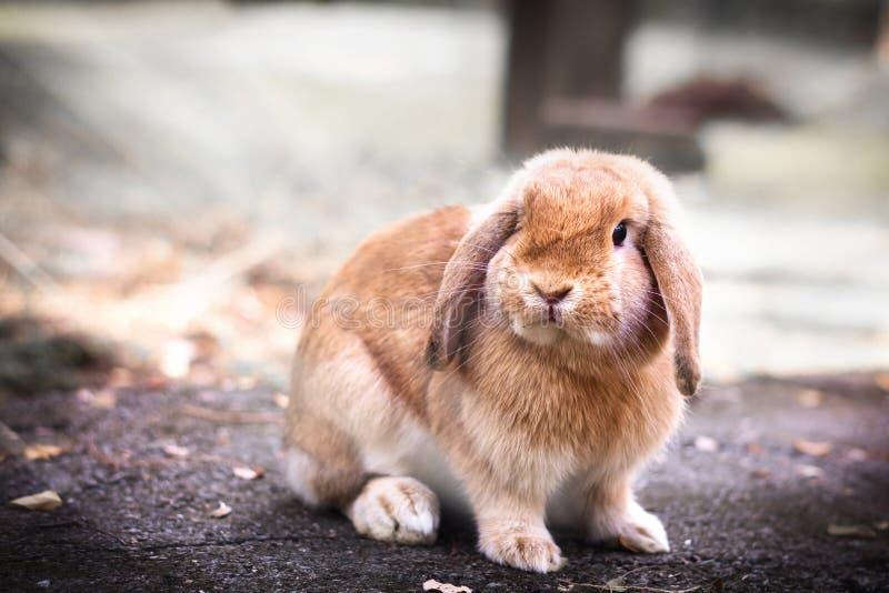 Coniglio di coniglietto sveglio del bambino immagini stock