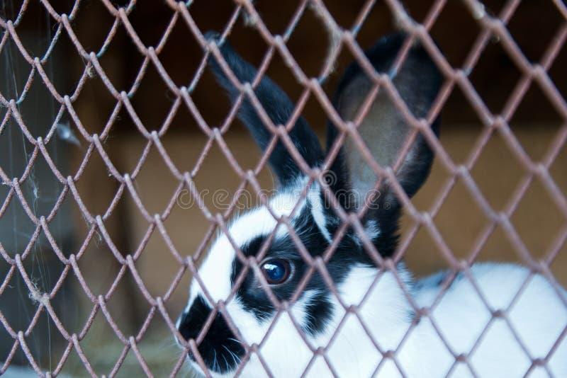 Download Coniglio Di Coniglietto In Una Gabbia Immagine Stock - Immagine di mangi, bianco: 56887119