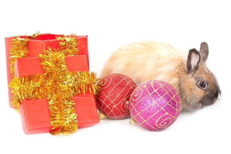 coniglio di Nuovo-anno immagini stock libere da diritti
