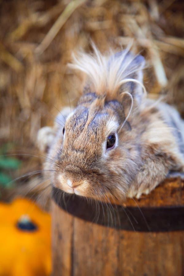 Coniglio divertente che si siede in secchio immagine stock