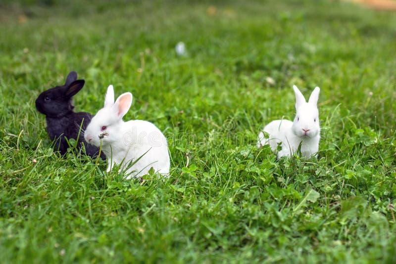 Coniglio divertente del bambino fotografia stock libera da diritti