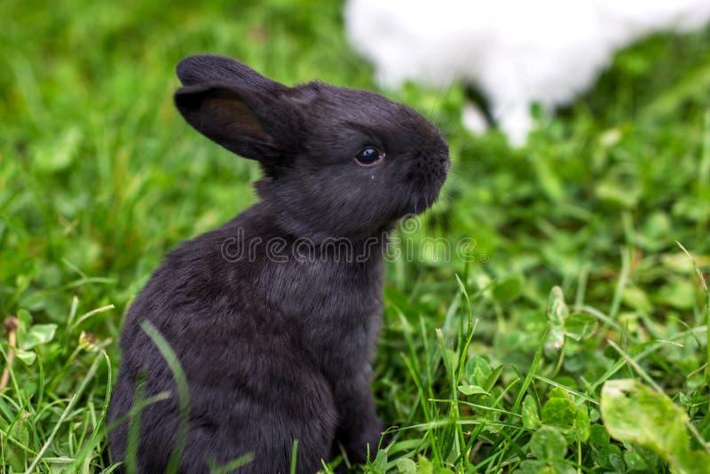 Coniglio divertente del bambino fotografia stock