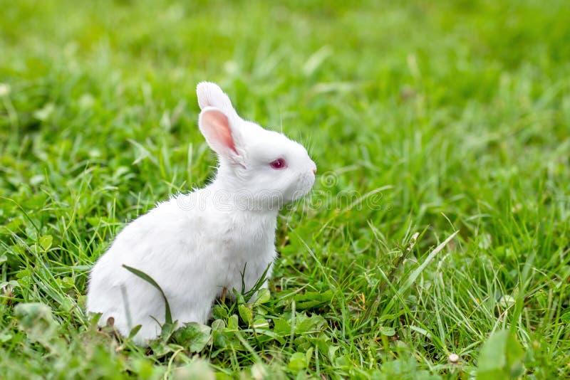 Coniglio divertente del bambino fotografie stock libere da diritti