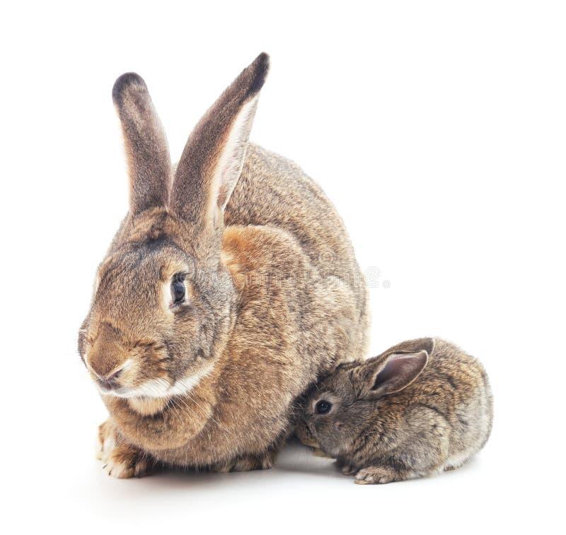 Coniglio e un piccolo coniglietto fotografie stock
